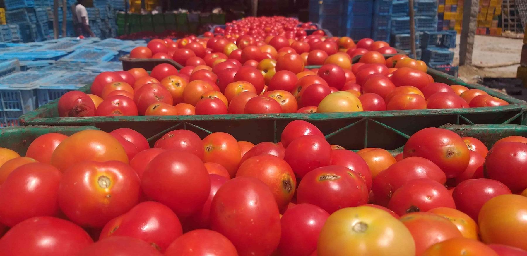 Madanapalle Tomato Market