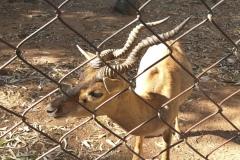 Madanapalle Zoo